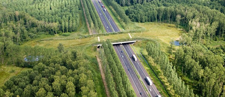 Saferoad will help establish a sustainable green infrastructure across Europe, by identifying cost-efficient and ecologically-effective mitigation strategies and maintenance practices to reduce road-wildlife conflicts.